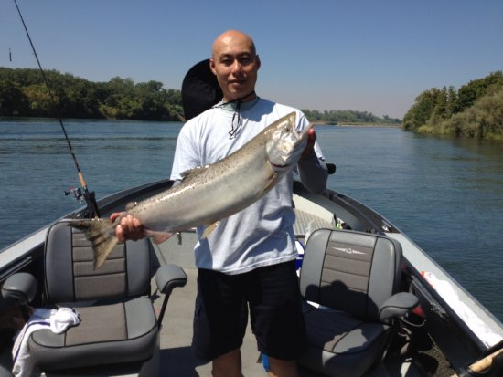 Great salmon fishing on the sacramento with bob sparre for Salmon fishing sacramento
