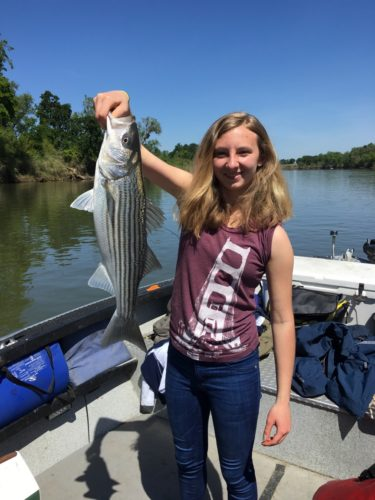 Sacramento Fishing Update Bob Sparre Fishing Guide Services