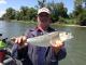 Shad Fishing Report