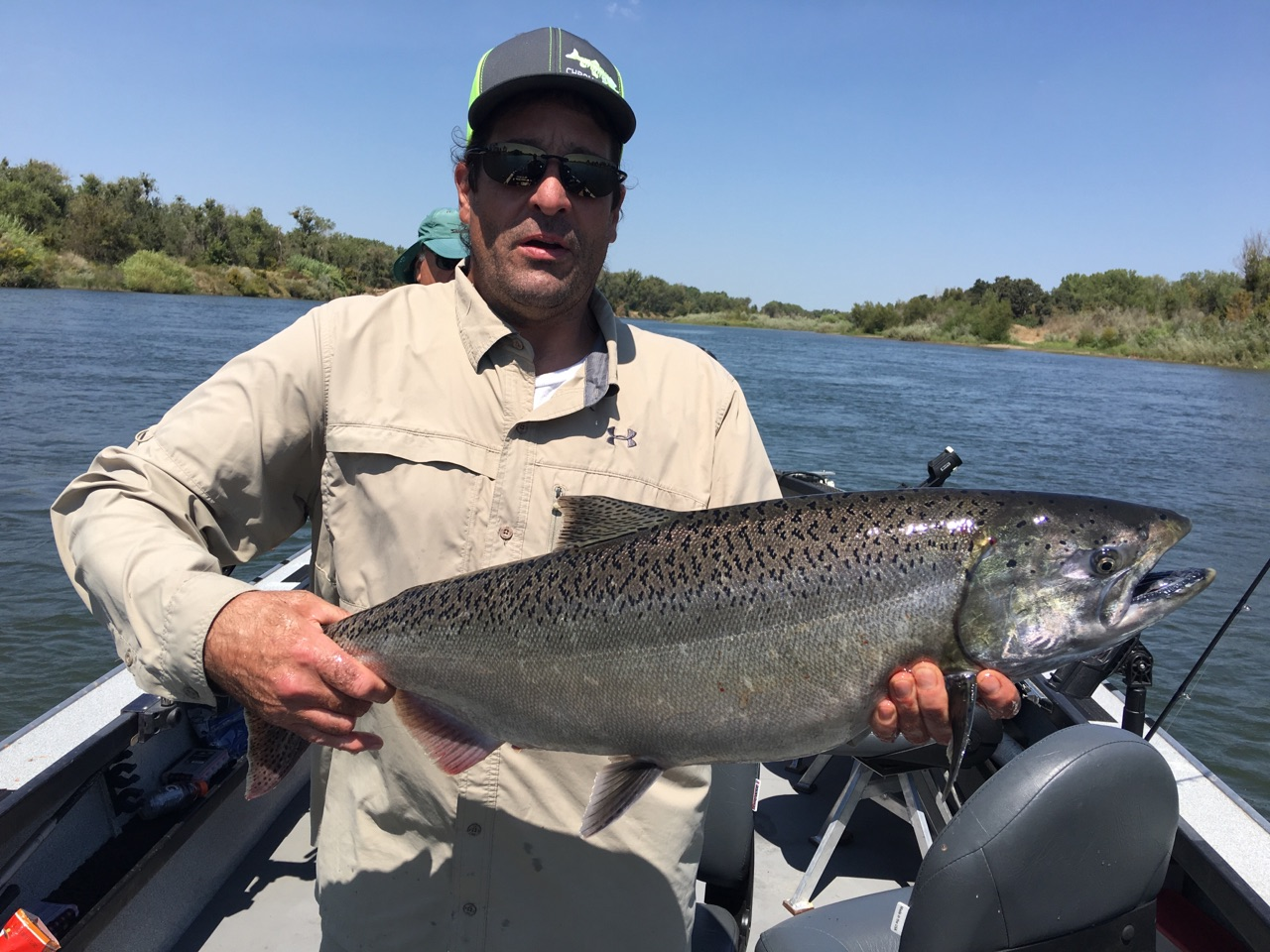 Salmon showing up in sacramento bob sparre fishing guide for Feather river fishing