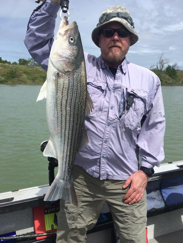 Fishing guide report april 25th 2017 bob sparre fishing for Striper fishing tips