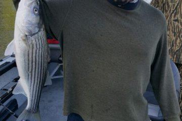 Striped Bass Sacramento